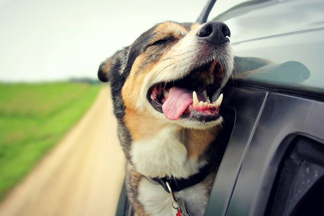 best ford cars for dogs